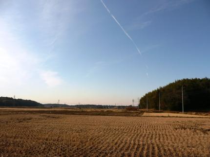 冬の田んぼ.JPG